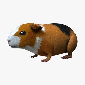 guinea pig - 3d obj