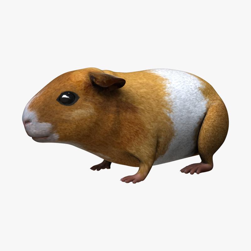 guinea pig - 3d fbx