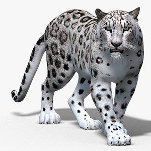 3d snow leopard cat animation model