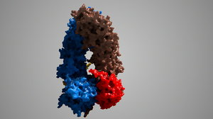 3d heat shock protein 90