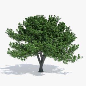 oak tree 3d max
