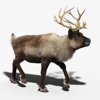 3d model reindeer fur rigged