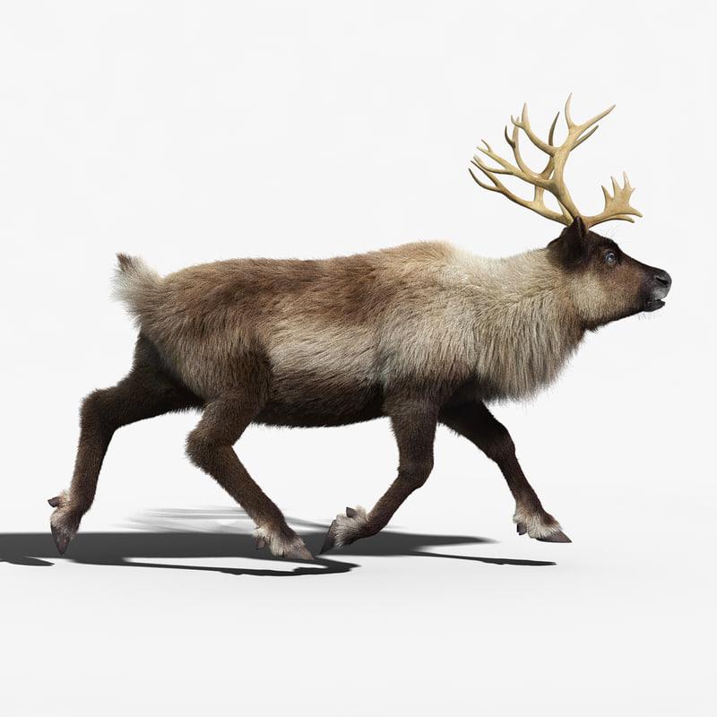 reindeer fur animation max