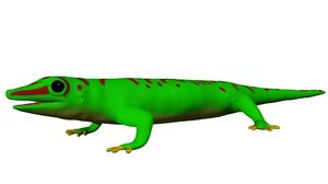 madagascar day gecko 3d model
