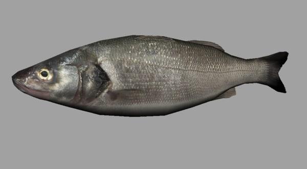 fish rigged 3d ma