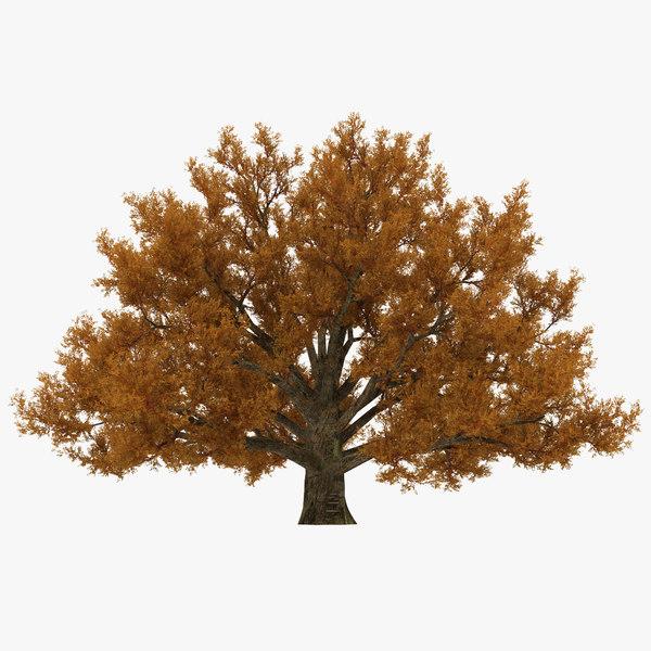 3d model old white oak autumn