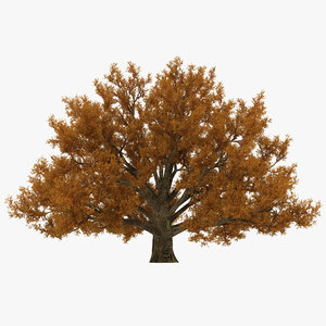 3d model old white oak autumn