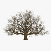 3d model old white oak winter