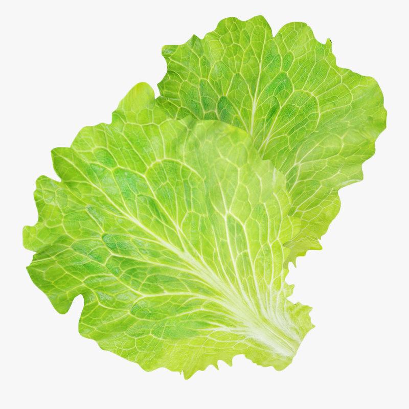 fbx lettuce leaves