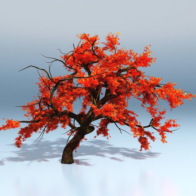 japanese maple tree 3d model