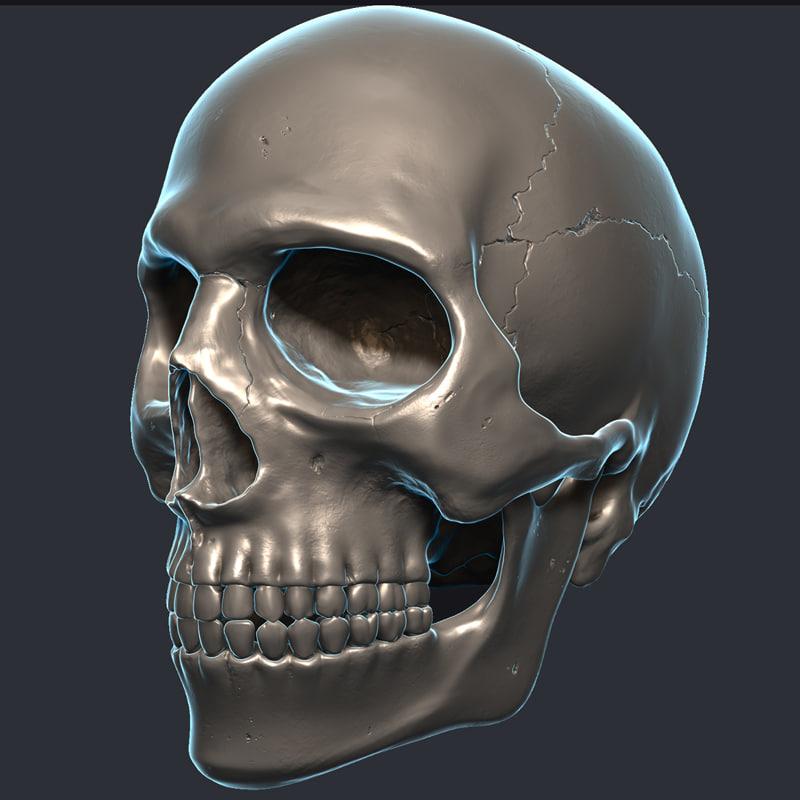 skull teeth jaw 3d model