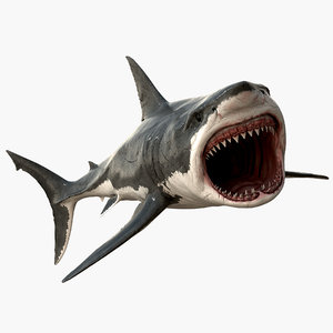 realistic great white shark 3d model