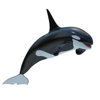 killer whale 2