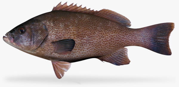 3ds max leopard grouper spotted phase