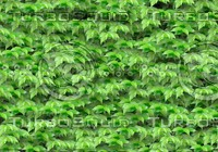 seamless green leave pattern background