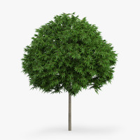 3d model japanese maple 4 4m