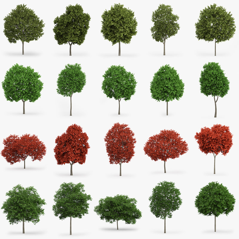 3d maple trees