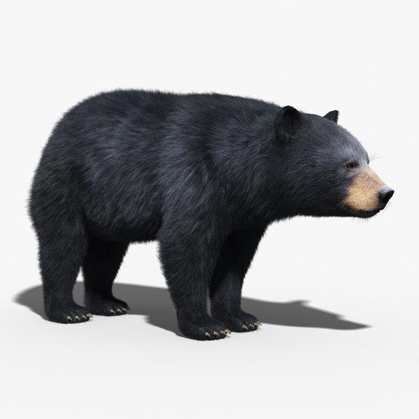 black bear fur 3d max