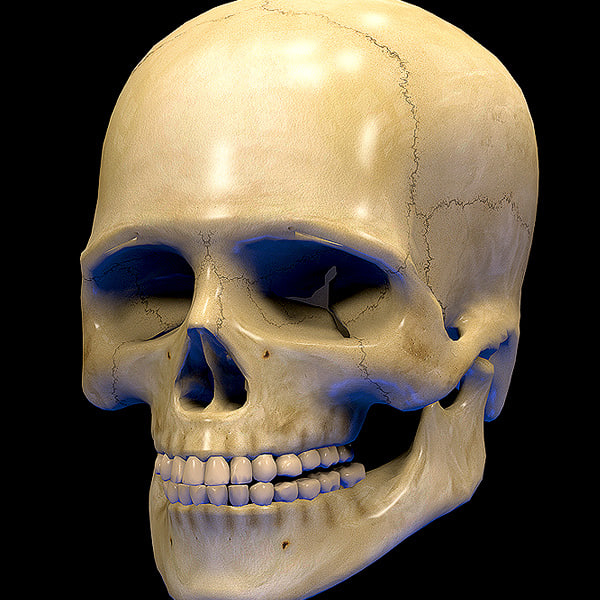 skull human real dxf