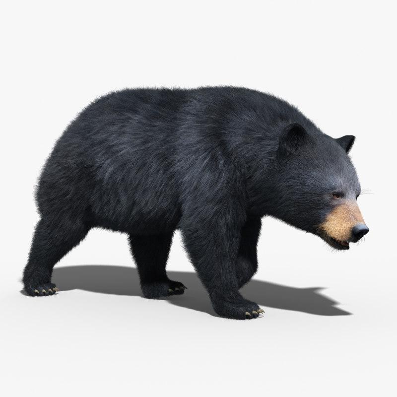black bear fur rigged 3d max