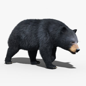 black bear fur rigged 3d max