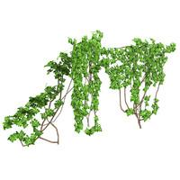 Ivy Vine 1