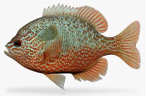 3d lepomis megalotis longear sunfish model
