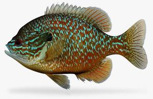 lepomis megalotis longear sunfish 3d ma