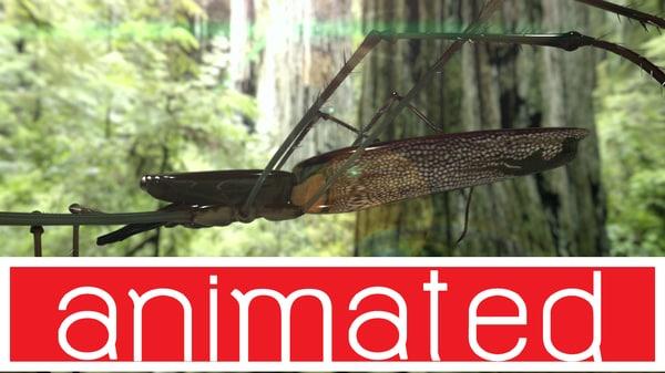 maya water spider