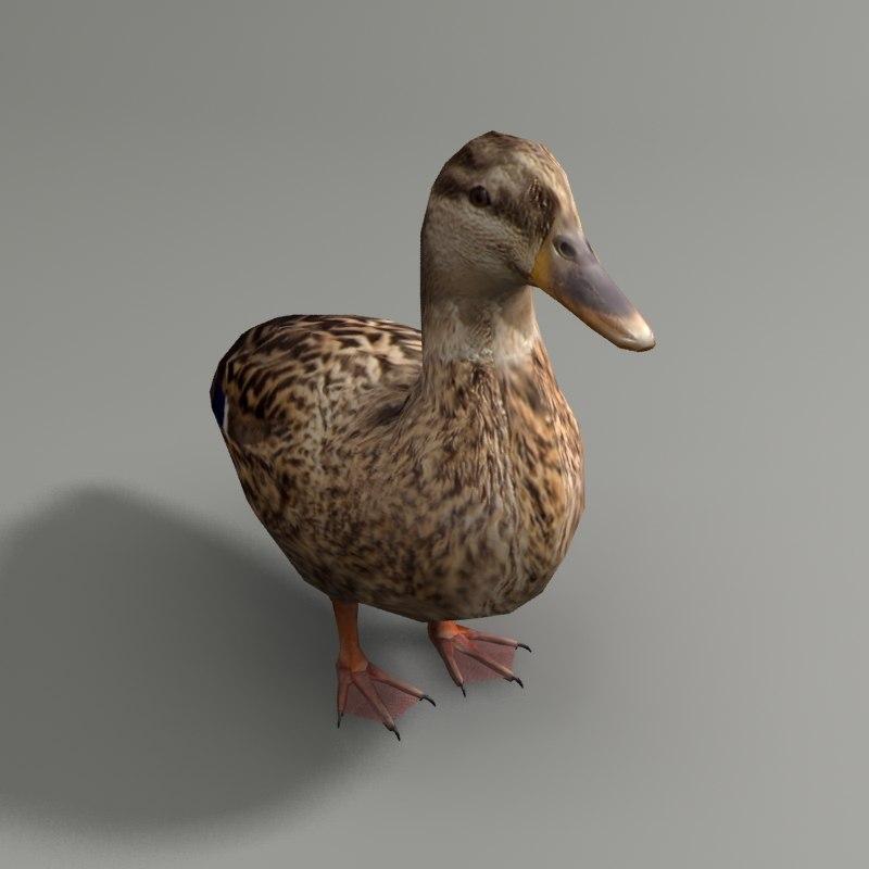 3d mallard duck female