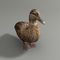 3d mallard duck female