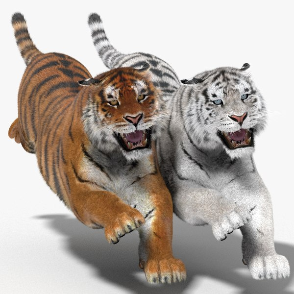 3d tiger fur color hair animation