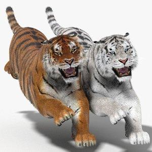 3d tiger fur color hair animation