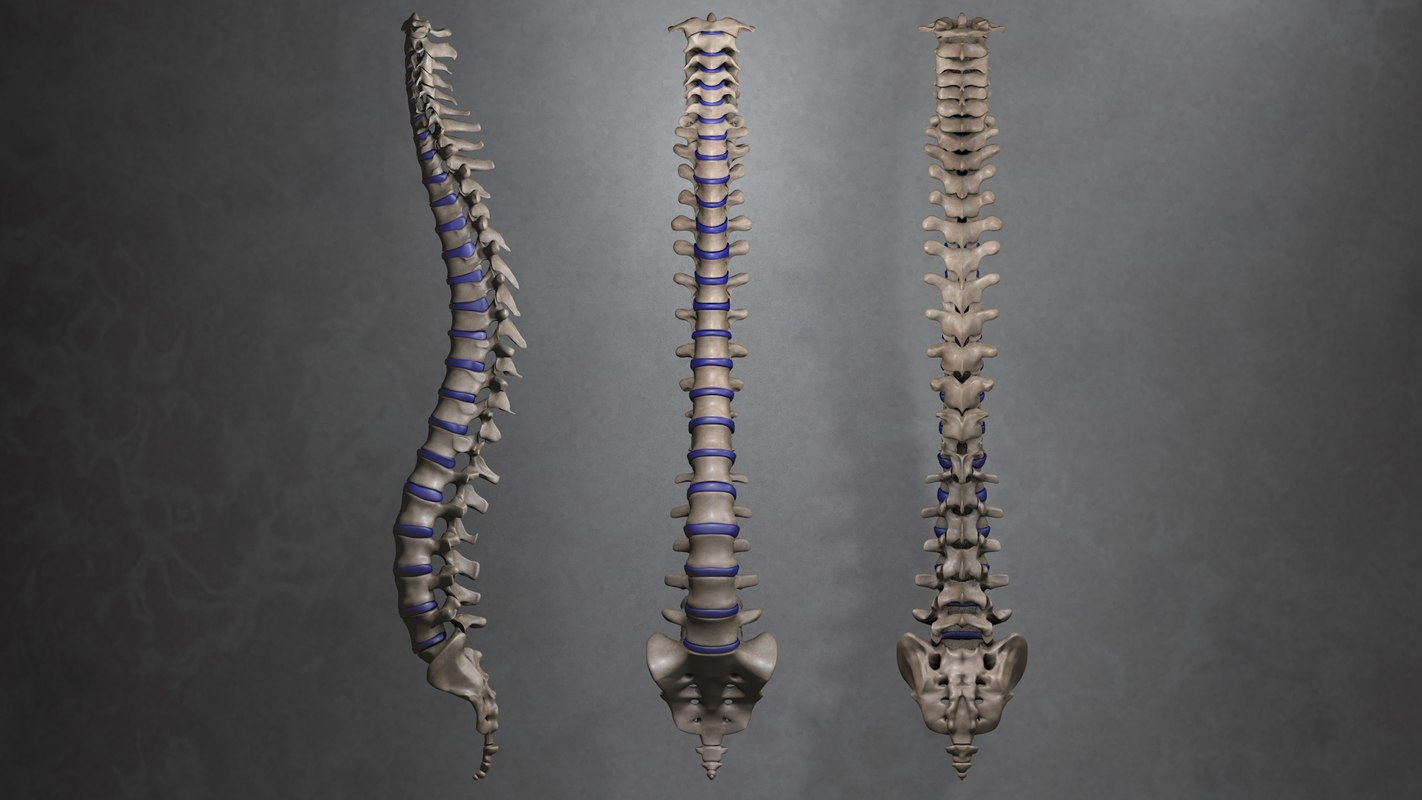maya human spinal column