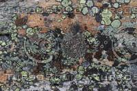 Lichen_Texture_0001