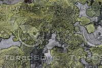 Lichen_Texture_0003