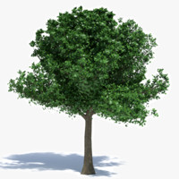 3d medium size tree