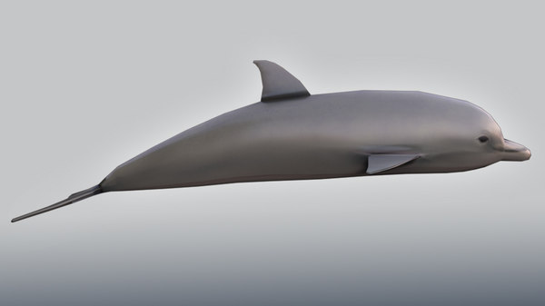 3d model of realistic dolphin
