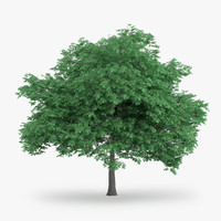 3d english oak 8 4m model