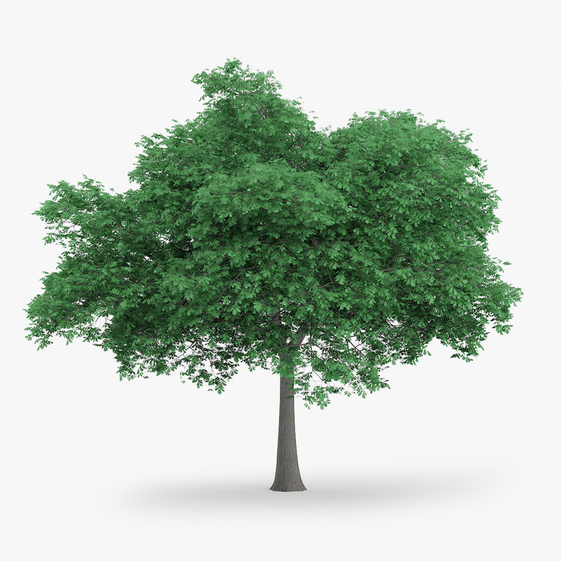 english oak 11 4m c4d