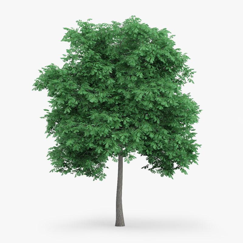 3d english oak 6 6m model