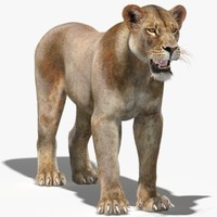 3ds max lioness 2 fur