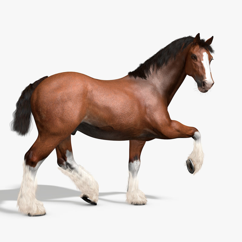 3d rigged animations clydesdales horse model