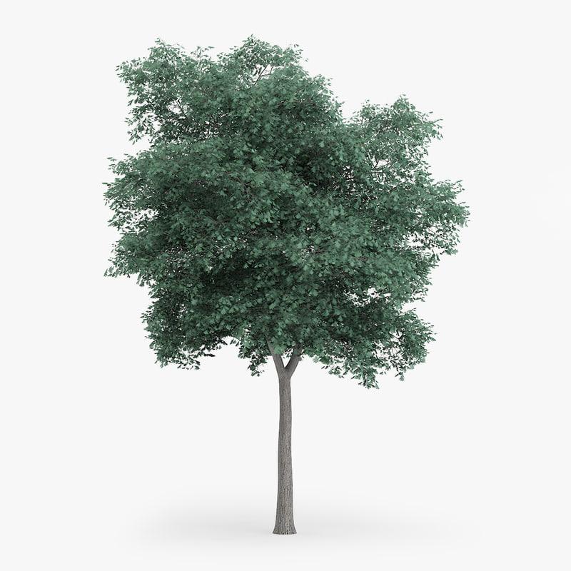 northern red oak 12 3d max