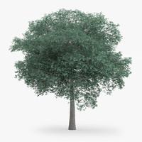 northern red oak 14m 3d obj