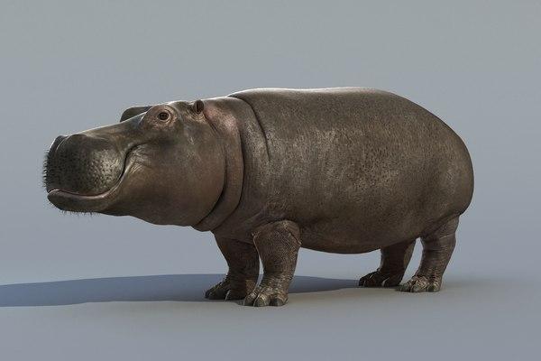 hippopotamus hippo 3d max
