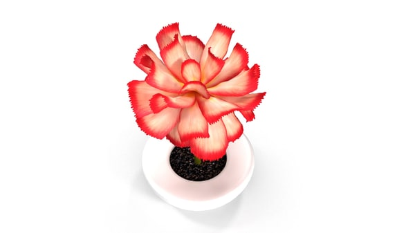 3d obj pink flower white pot