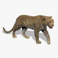 maya leopard rigged fur animations