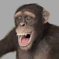 Chimpanzee - realistic
