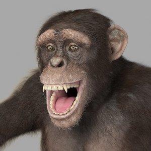 chimp - 3d max
